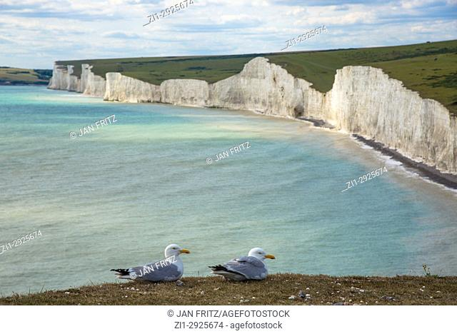 two seagulls at edge of cliff at coast with Seven Sisters at Beachy Head, Sussex, England
