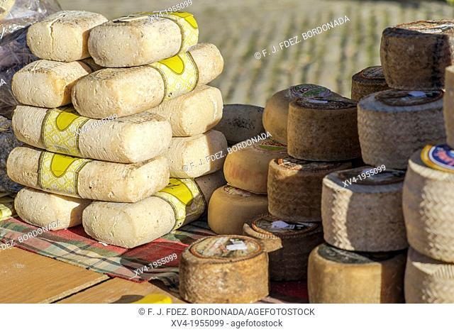Cheese staked at Mediaeval village of Ainsa during 2013 Ferieta Celebration, Sobrarbe-Huesca, Aragon Pyrenees, Spain