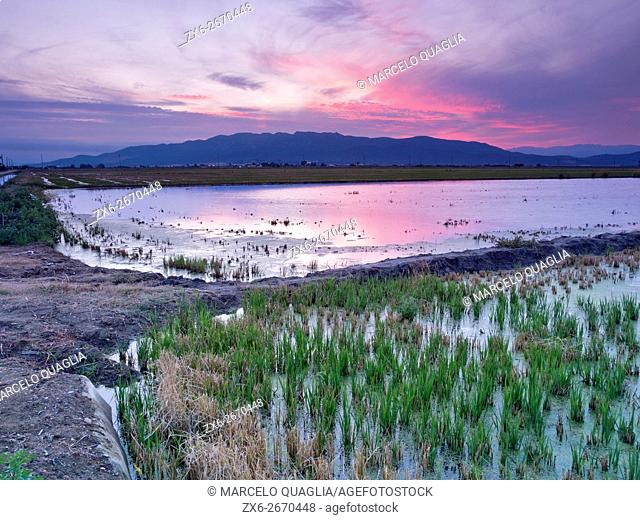Montsia Hills and flooded rice fields after harvest at dusk. Ebro River Delta Natural Park, Tarragona province, Catalonia, Spain