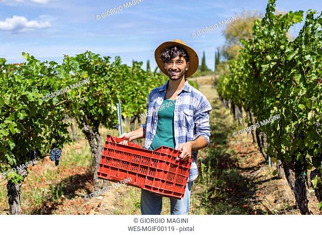 Portrait of smiling man holding box with harvested grapes in vineyard