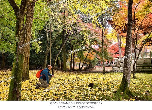 Falling leaves at Daigo-ji Temple, Kyoto, Japan
