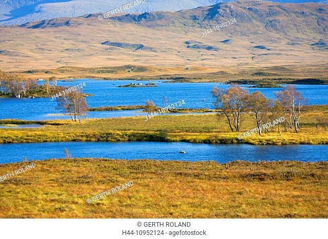 Rannoch moor, Great Britain, Europe, Scotland, highland, moor, lake, water, trees, birches, autumn