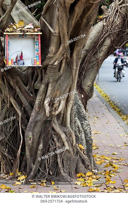 Vietnam, Hue, tree and shrine
