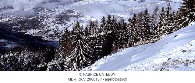 View of the valley and the firs under snow from Vallandry