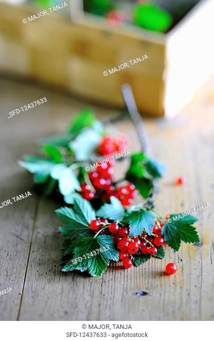 Fresh redcurrants and leaves on a wooden table