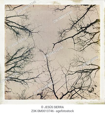 Abstracs trees