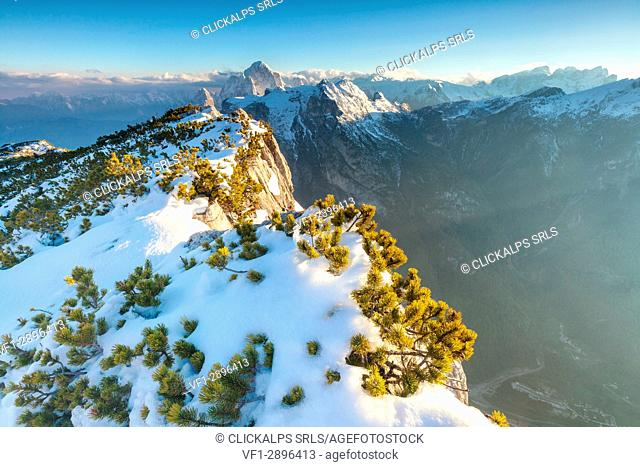 Europe, Italy, Veneto, Belluno, Agordino, Dolomites. Pristine snow and mountain pine shrubs on Palazza Alta, in the background the Agner