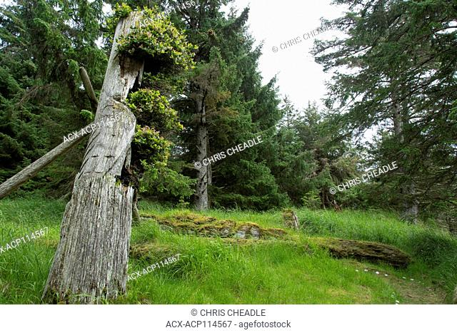 Old Totem ploes at Skedans, Gwaii Haanas National Park Reserve and Haida Heritage Site, Haida Gwaii, formerly known as Queen Charlotte Islands, British Columbia