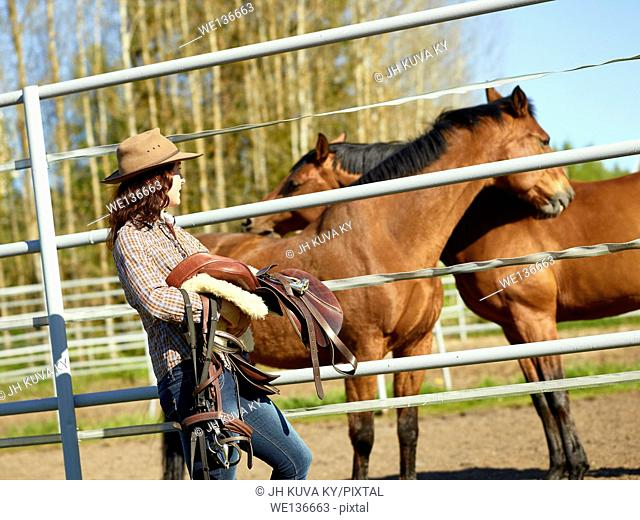 Cowgirl carrying a saddle, horse in a paddock. South Finland in May