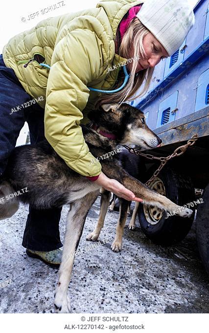 Volunteer veterinarian examines Karin Hendrickson's dog at the Vet Check in Wasilla, Alaska, 2014 Iditarod