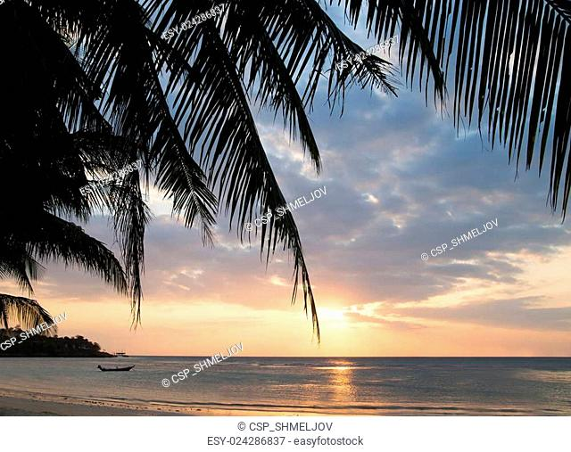 Beautiful view of sunset on the beach. Palm in a sunlight