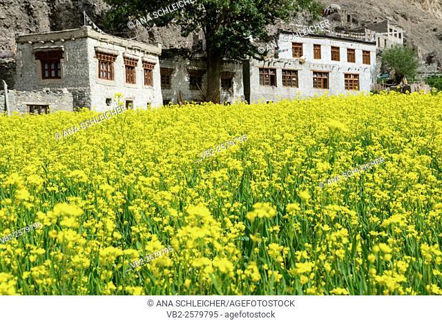 Markha village. Trekking in Markha valley (Laddakh, India)
