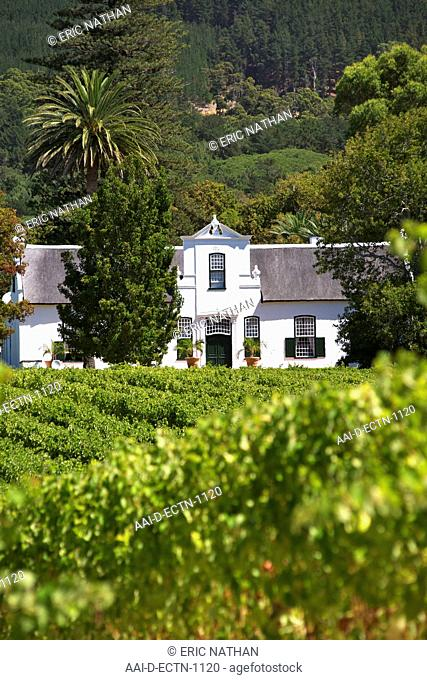 View of the manor house and vineyards at the Buitenverwagting wine estate in Constantia, Cape Town, South Africa