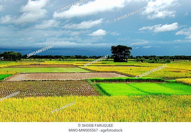 Natural Beauty of Anowara, Chittagong, Bangladesh September 1, 2006