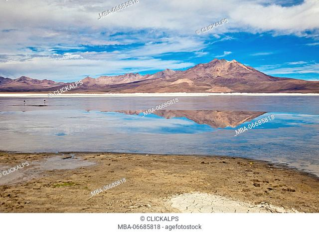The volcanic cones of the Andes are reflected in the saltwater lagoon of the Salar de Surire Natural Monument. Chile. South America