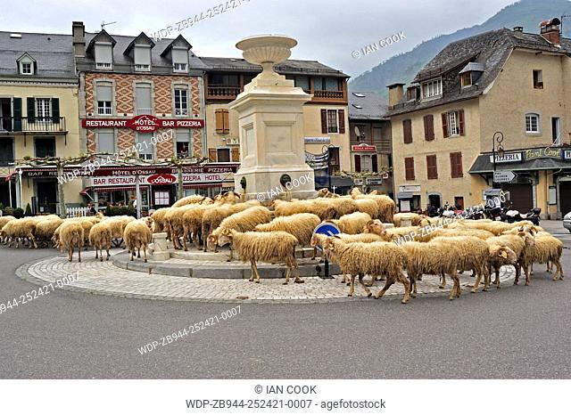 herd of sheep drinking at central fountain, Laruns, Pyrenees-Atlantique Department, Aquitaine, France