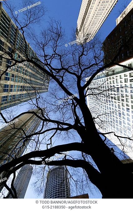 Looking up. Connors Park on Rush Street