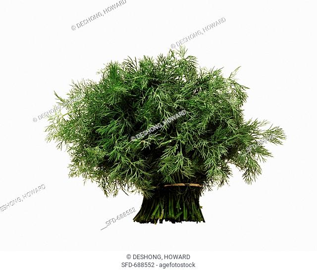 Fresh Bunch of Dill on White Background