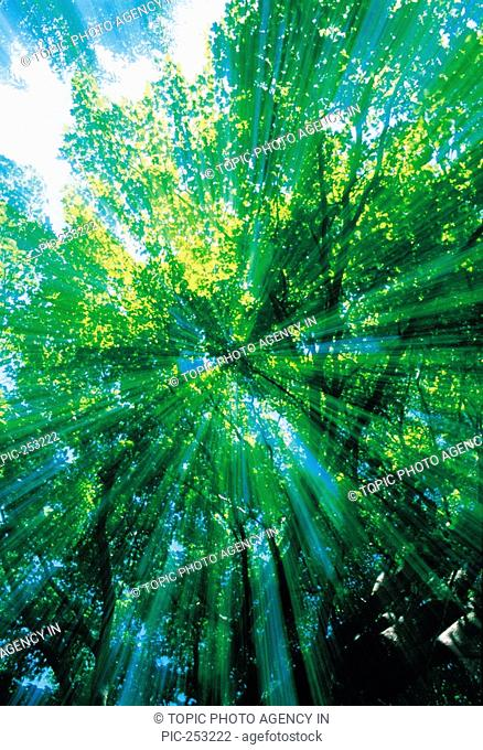 Sunlight Through Leaves Of Trees