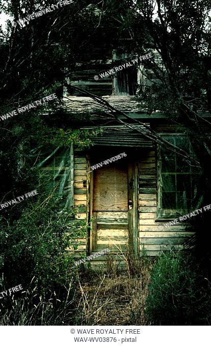 Overgrown derelict house, Robsart, Saskatchwan, Canada