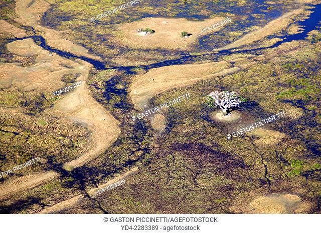 Aerial view of the Okawango Delta, Botswana. The Okavango Delta is home to a rich array of wildlife. Elephants, Cape buffalo, hippopotamus, impala, zebras