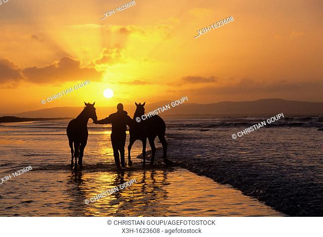 horses training on the beach of Downhill, County Londonderry, Northern Ireland, United Kingdom, Western Europe