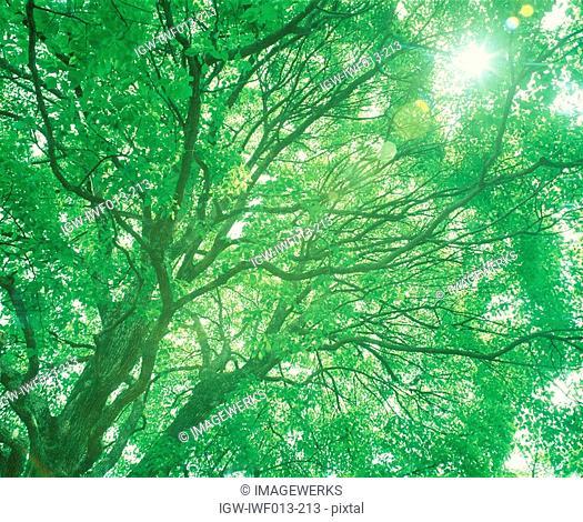 View of sunlight through tree