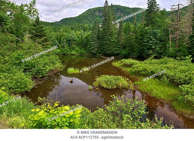 River in boreal forest, Parc National du Saguenay, Quebec, Canada