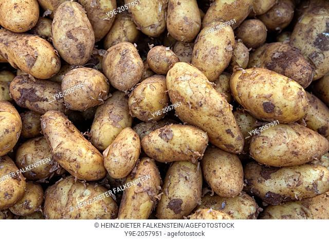 New potatoes (Solanum tuberosum) at a market stall, Hanover, Lower Saxony, Germany, Europe