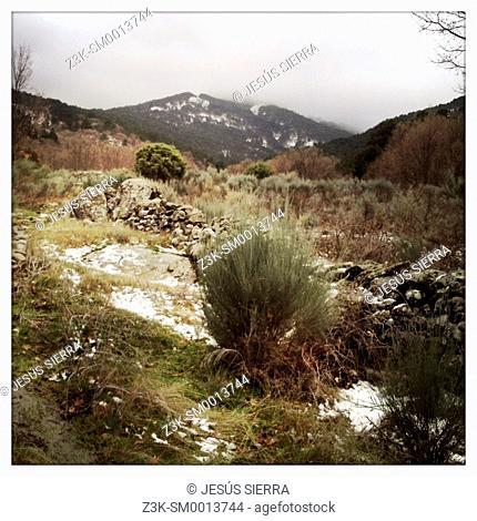 Sierra de Gredos, Navaluenga, Avila province, Spain