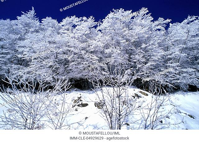 Snowy Landscape, trees, Lake of Prespes, Macedonia Central, Greece