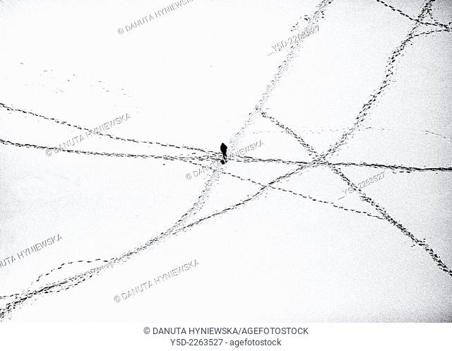 single person between roads created by footprints in snow, view from above, French Alps, France