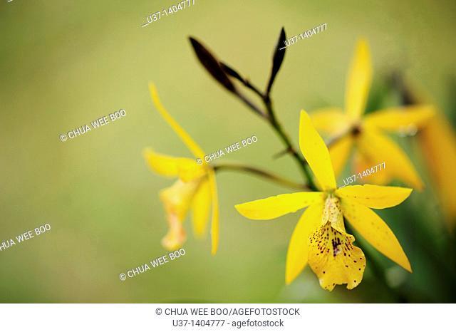 Orchid Garden, Kuching, Sarawak, Malaysia