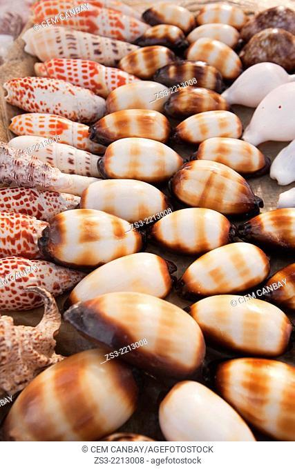 Seashells at the beach, Jambiani, Zanzibar Island, Zanzibar Archipelago,Tanzania, East Africa