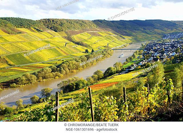 autumn in the Moselle valley with the wine village Reil