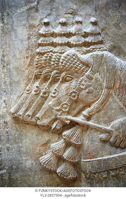 Stone relief sculptured panel of horses. From Dur Sharrukin the palace of Assyrian king Sargon II at Khorsabad, 713-706 BC