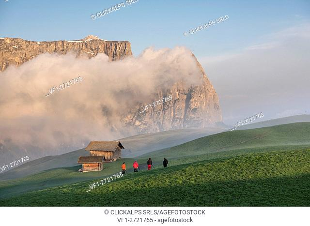 Alpe di Siusi/Seiser Alm, Dolomites, South Tyrol, Italy. Sunrise on the Seiser Alm / Alpe di Siusi. In the background the peaks of Sciliar/Schlern