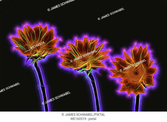 Abstract neon glowing flowers