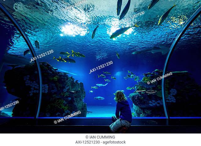 Boy watching fish in tunnel of huge tank in the Blue Planet Aquarium; Copenhagen, Denmark