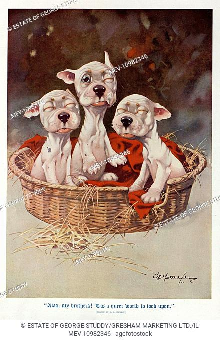 Alas My Brothers! 'Tis a queer world to look upon. Three newborn puppies slowly open their eyes for the first time. This image was also published under the...