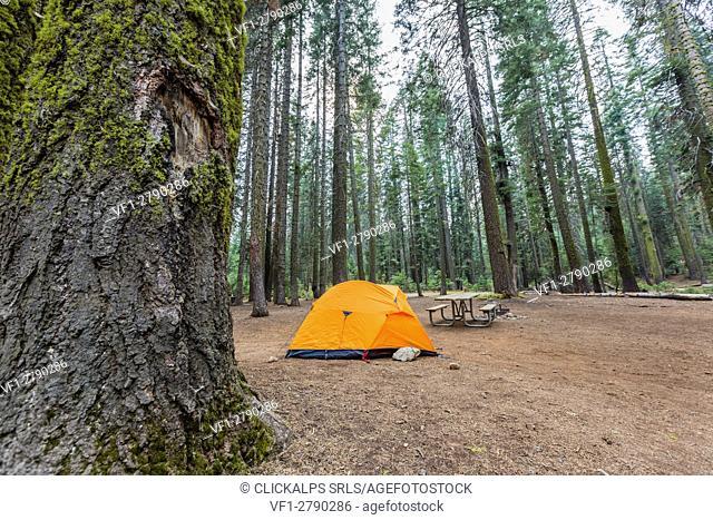 Orange tent in Crane Flat campground. Yosemite National Park, California, USA