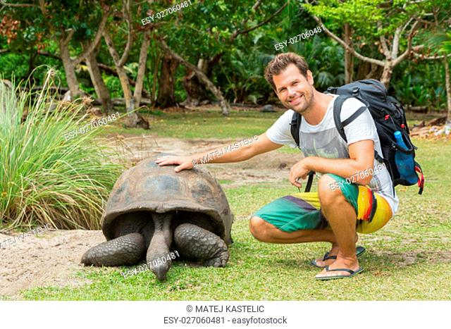 Male tourist caressing and admiring big old Aldabra giant tortoises, Aldabrachelys gigantea, in National Marine Park on Curieuse island