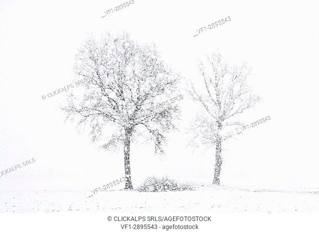 Turin province, Piedmont,Italy, Europe. Abstract snow the Piedmont plain