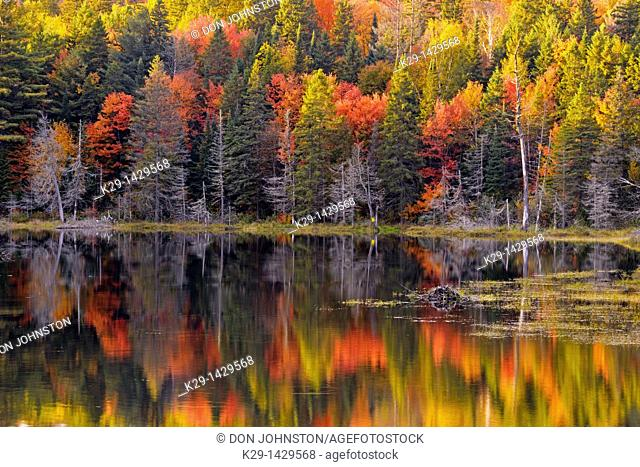 Autumn reflections in Canoe Lake Algonquin Provincial Park, Ontario