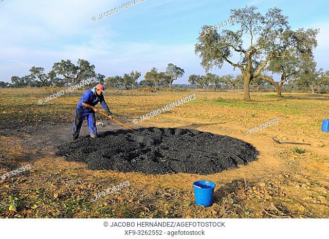 Artisanal elaboration of picón (small charcoal) La Albuera. Badajoz province. Extremadura. Spain