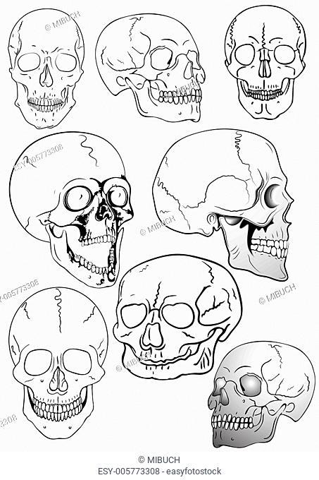 vector various skulls - vector