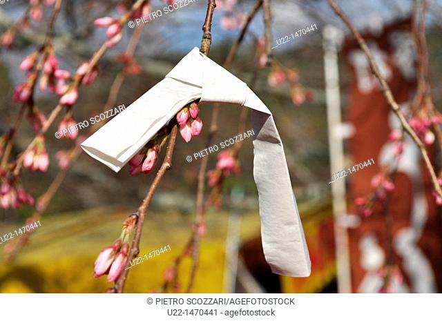 Kyoto (Japan): wish written on a little paper sheet, knobbed to a blossoming cherry tree in Maruyama park, during Spring