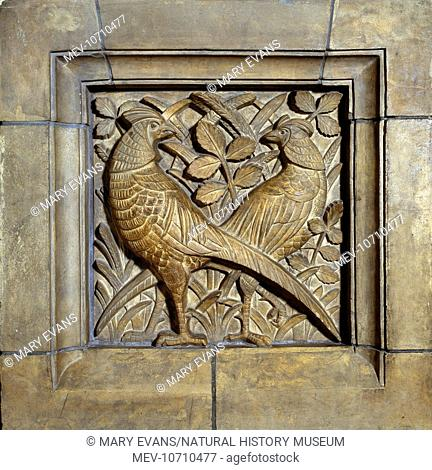 Detail of terracotta panel showing two birds. Alfred Waterhouse (1830-1905) designed the museum in the 1860s, and it first opened its doors on Easter Monday...
