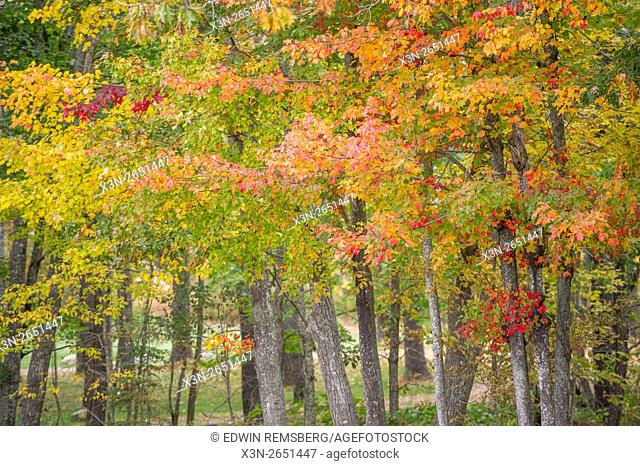 Fall foliage in Wiscasset, Maine