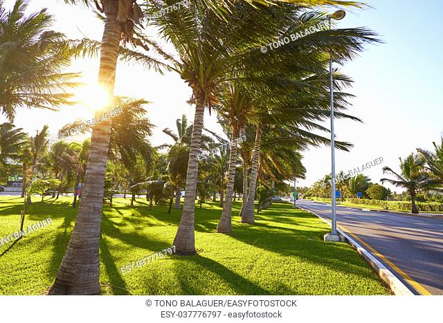 Cancun Mexico Kukulcan boulevard palm trees at Hotel Zone in Mexico